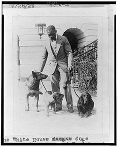 """The White House dogs King Tut, Whoopie, and Englehurst Gillette"""