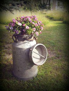 Alte Milchkanne und Mini Petunia - old milk can and millionbells in our garden