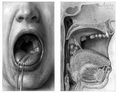 Max Brodel from Johns Hopkins is a master of medical illustration.