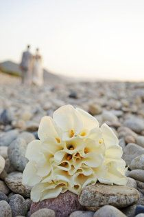 Calla lillies