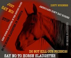 protect our horses and burros! | Via Linda Redman