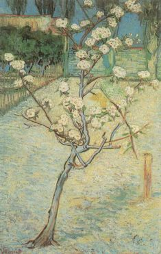 Stretched Canvas Print: Small Pear Tree in Blossom Canvas Art by Vincent van Gogh : Vincent Van Gogh, Painting Edges, Oil Painting On Canvas, Canvas Art, Van Gogh Paintings, Your Paintings, Flower Paintings, Virtual Museum Tours, Pear Trees