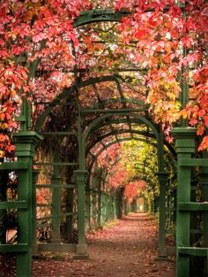 Tunnel of Leaves. love that color of green on that trellis