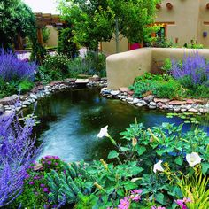 Southwest style: Courtyard pond -