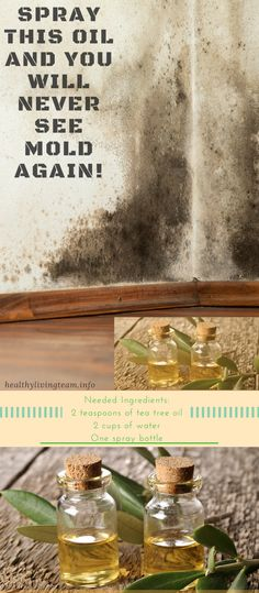 Spray This Oil And You Will Never See Mold Again!