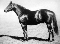 Polynesian, Preakness winner and sire of Native Dancer