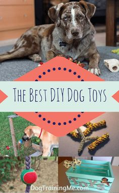 The best DIY dog toys from around the web. We created a list of easy homemade dog toys, DIY toys for aggressive chewers, DIY dog toys for mental stimulation and physical exercise, and some indestructible ones as well. We also include a few ideas for DIY dog toy boxes for storage. Check out our list now!