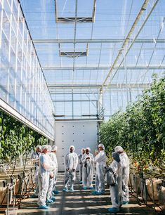 The global indoor agriculturemarketis expected to grow to more than…