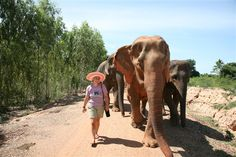 Just your usual morning walk... Volunteer with GoEco in Thailand with the Elephant Rescue and Conservation program - For more information visit the project page