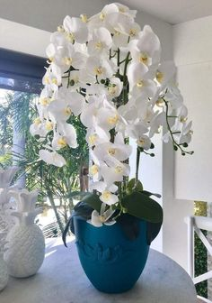 Arrangements Ikebana, Orchid Flower Arrangements, Beautiful Flower Arrangements, Indoor Orchids, Orchids Garden, Amazing Flowers, White Flowers, Beautiful Flowers, Flower Seeds