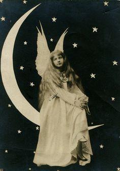 Maudelynn's Menagerie: Photo