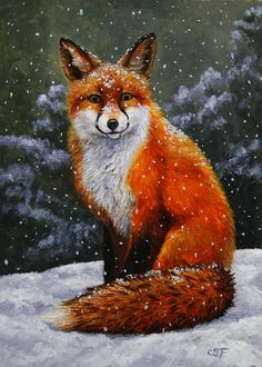 Snow Fox by Crista Forest - Snow Fox Painting - Snow Fox Fine Art Prints and Posters for Sale