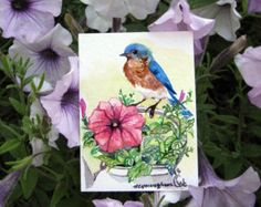ACEO Limited Edition Bluebird with black-eyed by annalee377