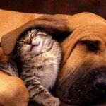 Pet Insurance: ASPCA