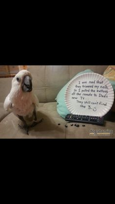 Training Your Pet Parrot Funny Birds, Cute Birds, Pretty Birds, Beautiful Birds, Animals And Pets, Funny Animals, Cute Animals, Smart Animals, Feathered Dinosaurs