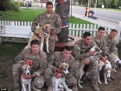 A whole family of pups saved from Afghanistan by our great guys...