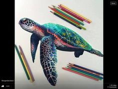 Pretty turtle drawing