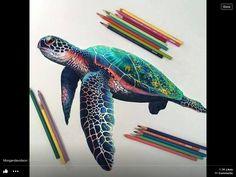 Pretty turtle drawing