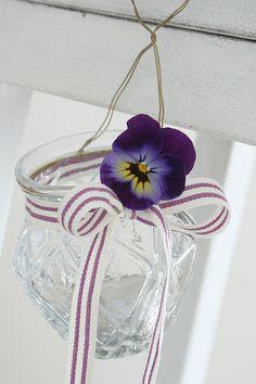 Single deep lavender pansy