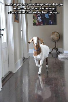 Goat Simulator: Home Edition< why the hell not have goats at indoor pets?! im sure you could train them to use the bathroom outside....plus goats are cool as hell.