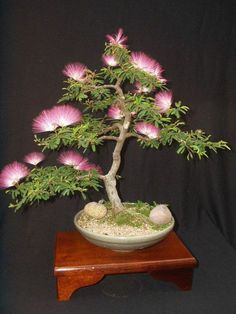 gartengestaltung bonsai baum schäne blüten