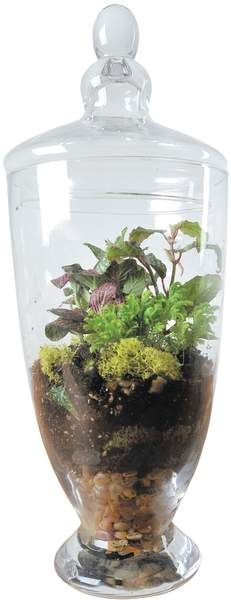 How to make a terrarium; Glass container gardens are assembled using a variety of materials