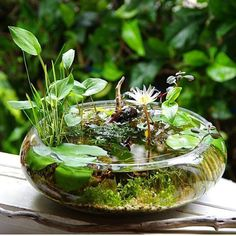 Small Water Gardens, Container Water Gardens, Indoor Water Garden, Garden Plants, Indoor Plants, Container Gardening, Garden Bed, Paludarium, Garden Projects