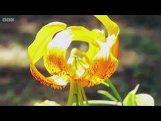 Great British Garden Revival S02E08 - YouTube