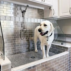 Top 60 Best Home Dog Wash Station Ideas - Canine Shower Designs Large Dog Washing Station With Dog Bone Pattern Wall Tile Pet Washing Station, Dog Station, Pattern Wall, Wall Patterns, Animal Room, Küchen Design, Home Design, Wall Design, Dog Bathing Station