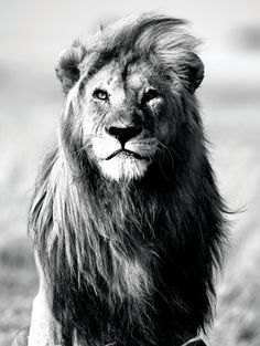 Wilde dieren (fotografie) Affiches - bij AllPosters.be