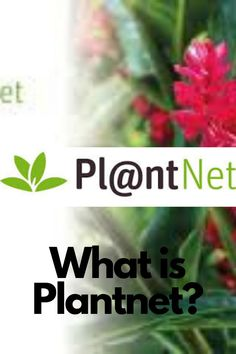 What is PlantNet? As of the 1st September 2020 the app PlantNet is blowing up on exploding topics. We review it, and tell you little more this exciting fun informative app that's been around since 2010. PlantNet is a plant identification website. Which uses an image search engine that helps identify flowers and plants with a simple click on their smartphone. PlantNet is also available as an app on Android or Apple stores. It has a huge database of 1,8 mill images with over 27909 species. Image Search Engine, Plant Identification, App Development Companies, Smartphone, September, Told You So, Android, Herbs, Apple