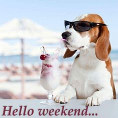Hello weekend #weekend hello weekend funny dog shades ice cream cherry beach summer