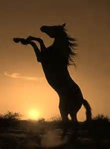 rearing horse silhouette - Bing Images