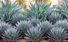50 incredibly low-maintenance landscaping ideas for the front garden, # La