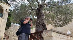 Ein Foto der Agios Neophytos, im Schatten des imposantsten Olivenbaums, den ich je gesehen habe :)