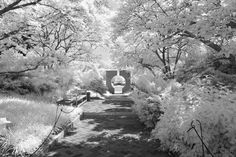 the series is a personal attempt to shed the nation's capitol in a different light --literally -- revealing familiarity through a radically altered lens. Infrared Photography, Photography Series, Different Light, Alters, Washington Dc, Photographers, Painting, Shapes, Art