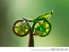 Mantis riding a vegetable bike - The Meta Picture
