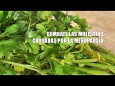 Beneficios Del Perejil, comparte con tus amigos. Sabias que es una planta ANTI-CANCERIGENA? CONOCE SUS MILAGROSAS PROPIEDADES HOY Y COMPARTE EL VIDEO CON TUS AMIGOS.