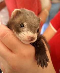 Cutest-Photos-of-Baby-Animals-in-Hand-10