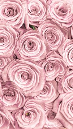 Imagem de iphone, pink, and rose