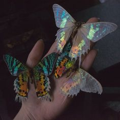 Image about butterfly in Fairy Tales - Princess by Celeste Elle Nature Aesthetic, Aesthetic Photo, Aesthetic Pictures, No Bad Days, Beautiful Butterflies, Belle Photo, Pretty Pictures, Aesthetic Wallpapers, Beautiful Creatures