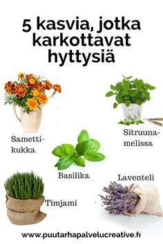 Inisevät inhokkimme ovat taas kohta riesana. Niitä voi torjua tuoksuilla: tässä kasveja, joiden tuoksusta hyttyset eivät pidä. www.puutarhapalvelucreative.fi