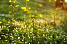 spring awakening green plants in forest on sunset background