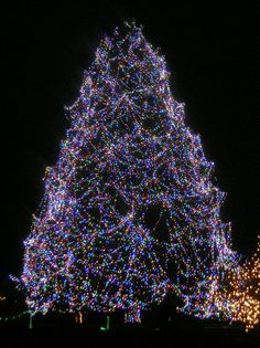 Christmas Tree at the Toledo Zoo :) Very lucky to have such an amazing tree right down the road :) People come from all over just so see it :o