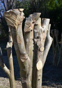 How NOT to prune a Crepe Myrtle. Or, how to commit Crepe Murder Early Spring, Myrtle, Trees, Gardening, Signs, Plants, Beginning Of Spring, Start Of Spring, Tree Structure