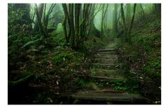 [Image] | 20 Mystical Forests That Are Ideal For Exploring With Your... - TIMEWHEEL