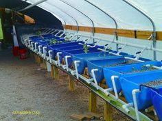 Aquaponic Greenhouse Build