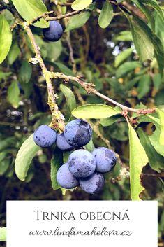 Blueberry, Fruit, Berry, Blueberries