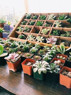 I am a bit obsessed with these succulents at the moment via sfgirlbybay