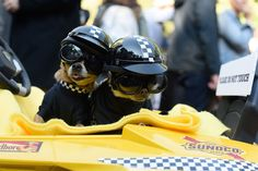 Some super cool race car drivers… | 66 Of This Year's Most Adorable Dog Costumes
